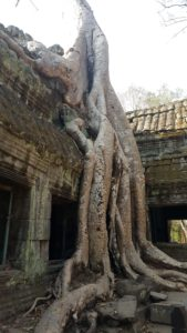 Ta Phrom - the 'Tomb Raider' temple.